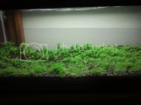 Vivarium Lighting Guide