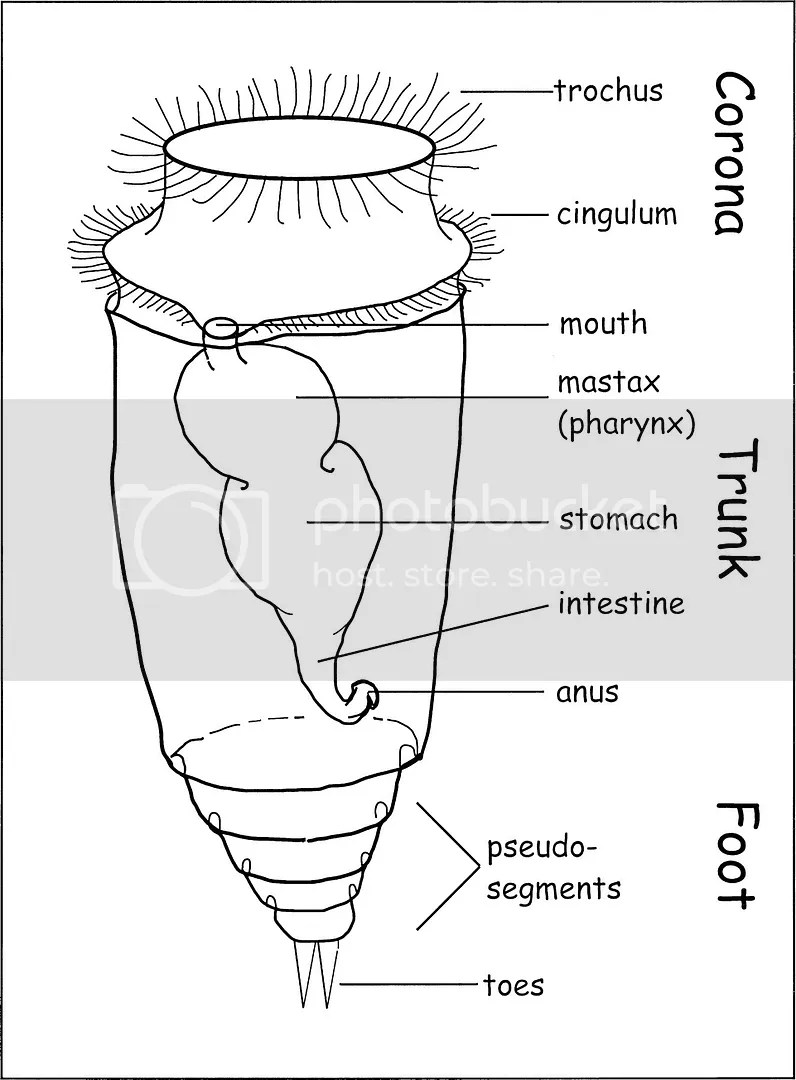 rotifer diagram labeled 12s trailer plug wiring vorticella