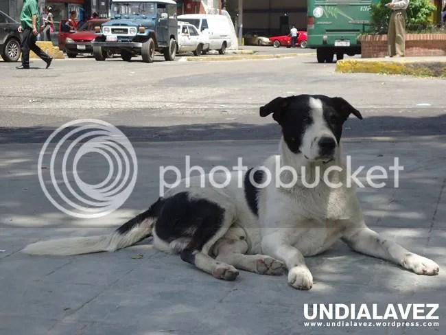 Perro en la Plaza del Pueblo