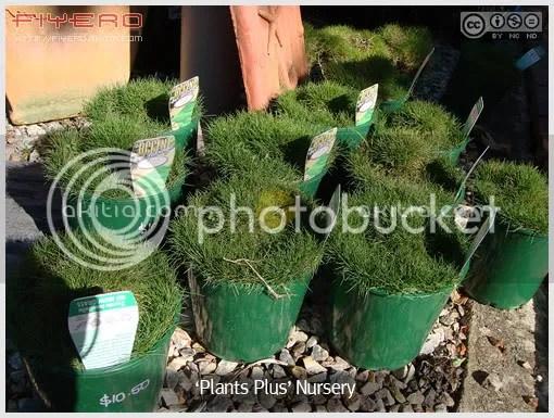 Plants Plus Nursery, ร้านขายต้นไม้ต่างแดน, ไม้ออสเตรเลีย, ต้นไม้, ดอกไม้, aKitia.Com