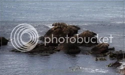 Stewart Island 2