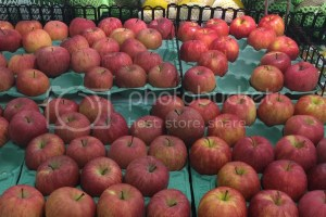 harga apel di jepang