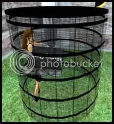 Caged!