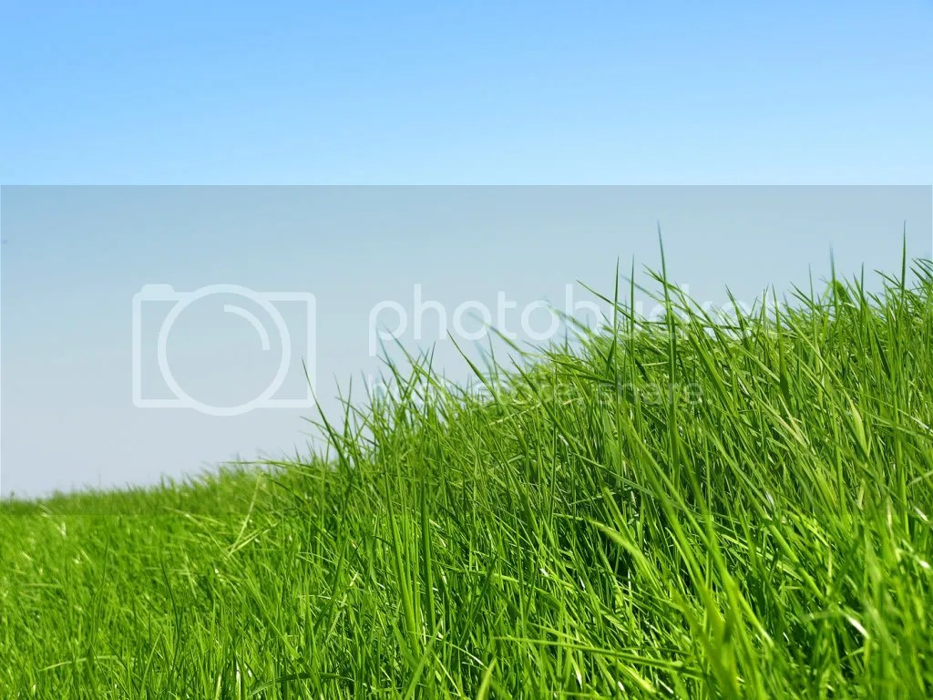 Grass Background Pictures, Images and Photos