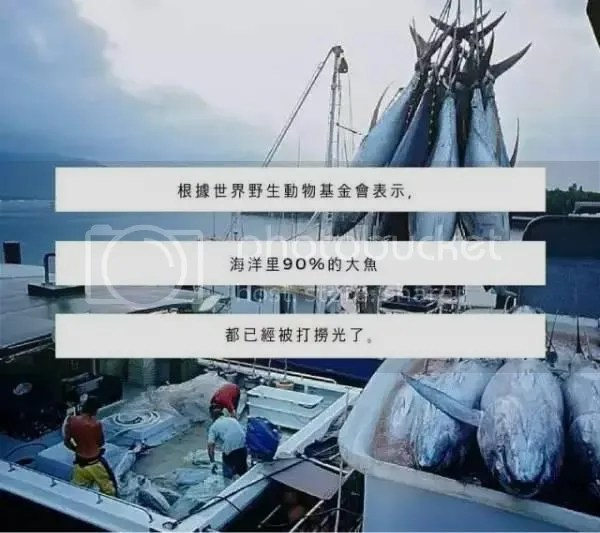 photo mp.weixin.qq.com_416f_0wx_fmtjpeg_zpspdumol8j.jpeg