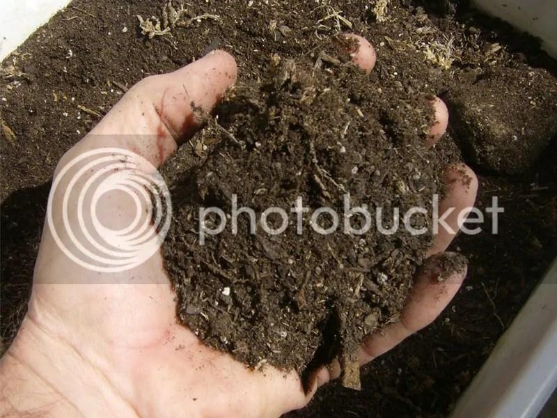 Penggunaan dan Manfaat Pupuk dari Kotoran Ternak