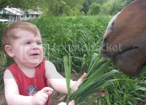 Feeding the Horses
