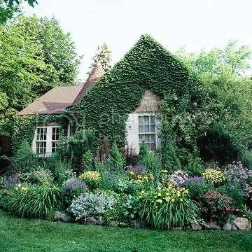 house  garden Pictures, Images and Photos