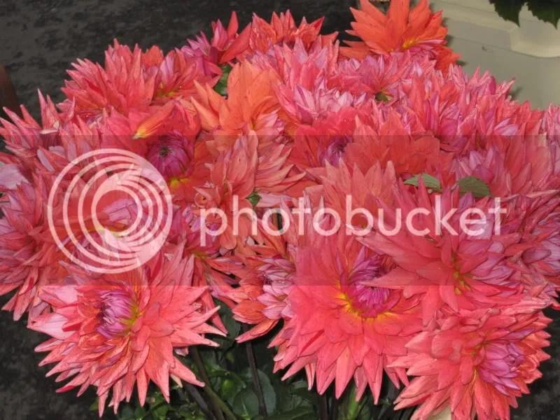 Cool flowers in the Gastown farmers market