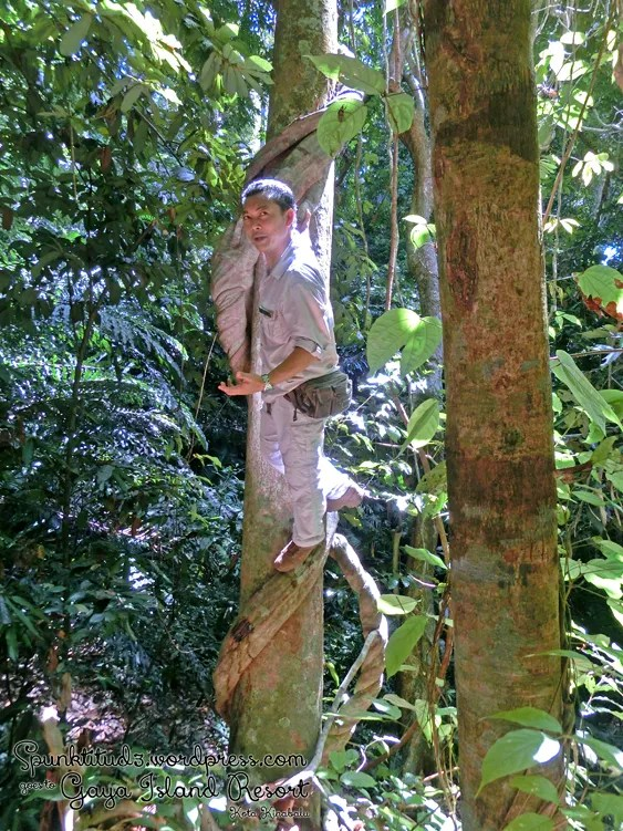Nature Walk at Gaya Island Resort