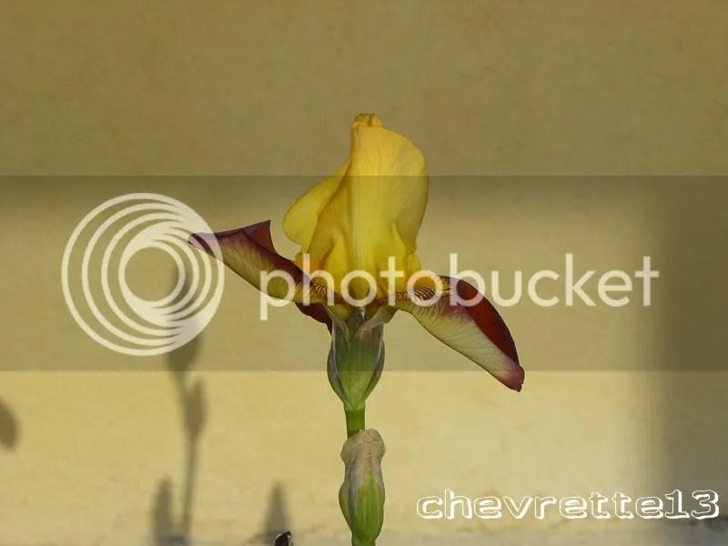 https://i0.wp.com/i1252.photobucket.com/albums/hh578/chevrette13/communaut/DSCN0068Copier_zpsed367036.jpg