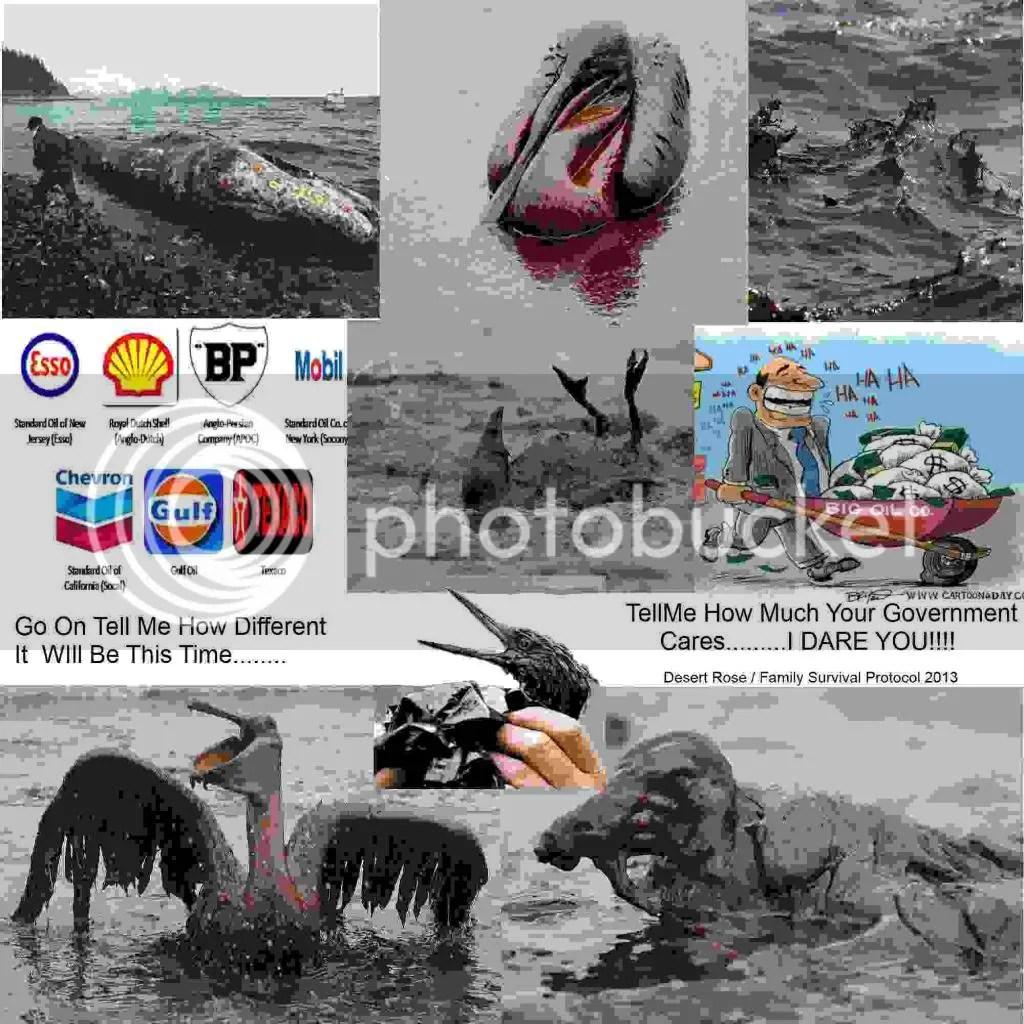 Oil Spill Collage photo OilSPillCOllage_zps91d122a3.jpg