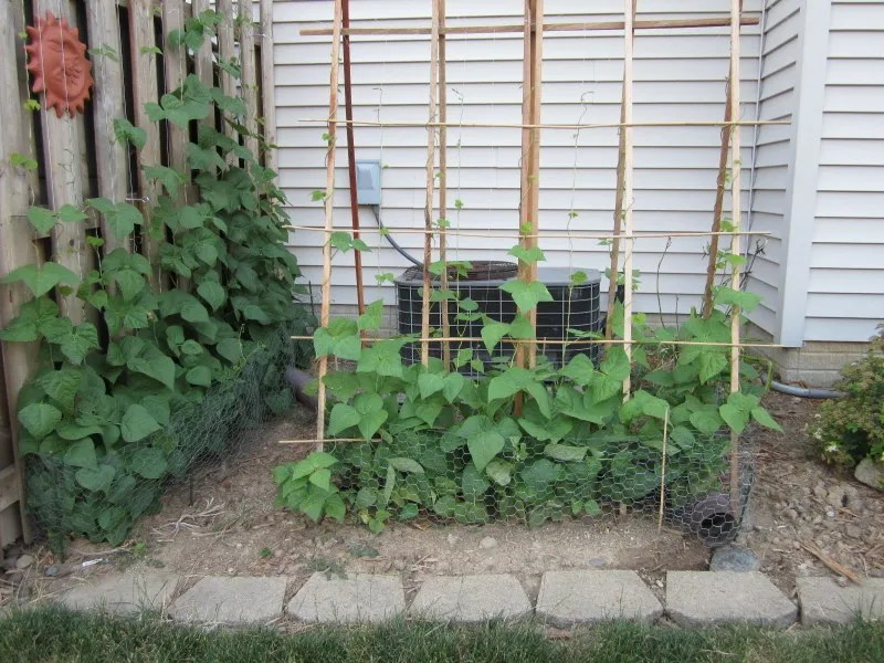 How to Build a Simple Trellis for Your Veggies and Flowers / MyUrbanGardenOasis