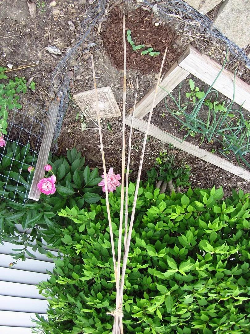 Small-space gardening / MyUrbanGardenOasis