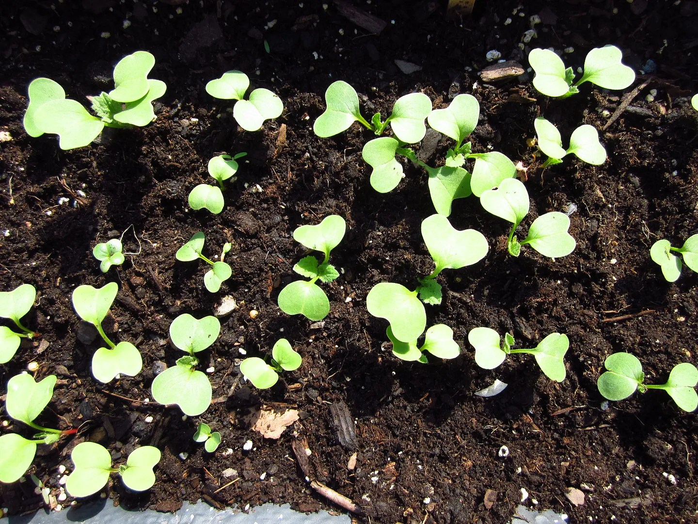 How to Plant Tiny Seeds / My Urban Garden Oasis