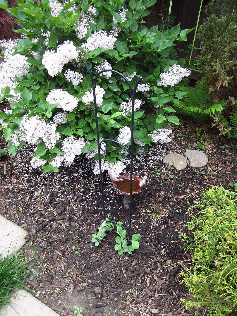 Re-plant Your Thinned Seedlings / MyUrbanGardenOasis