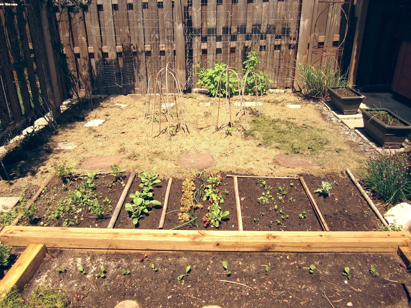 Small-space Side Yard Garden / MyUrbanGardenOasis