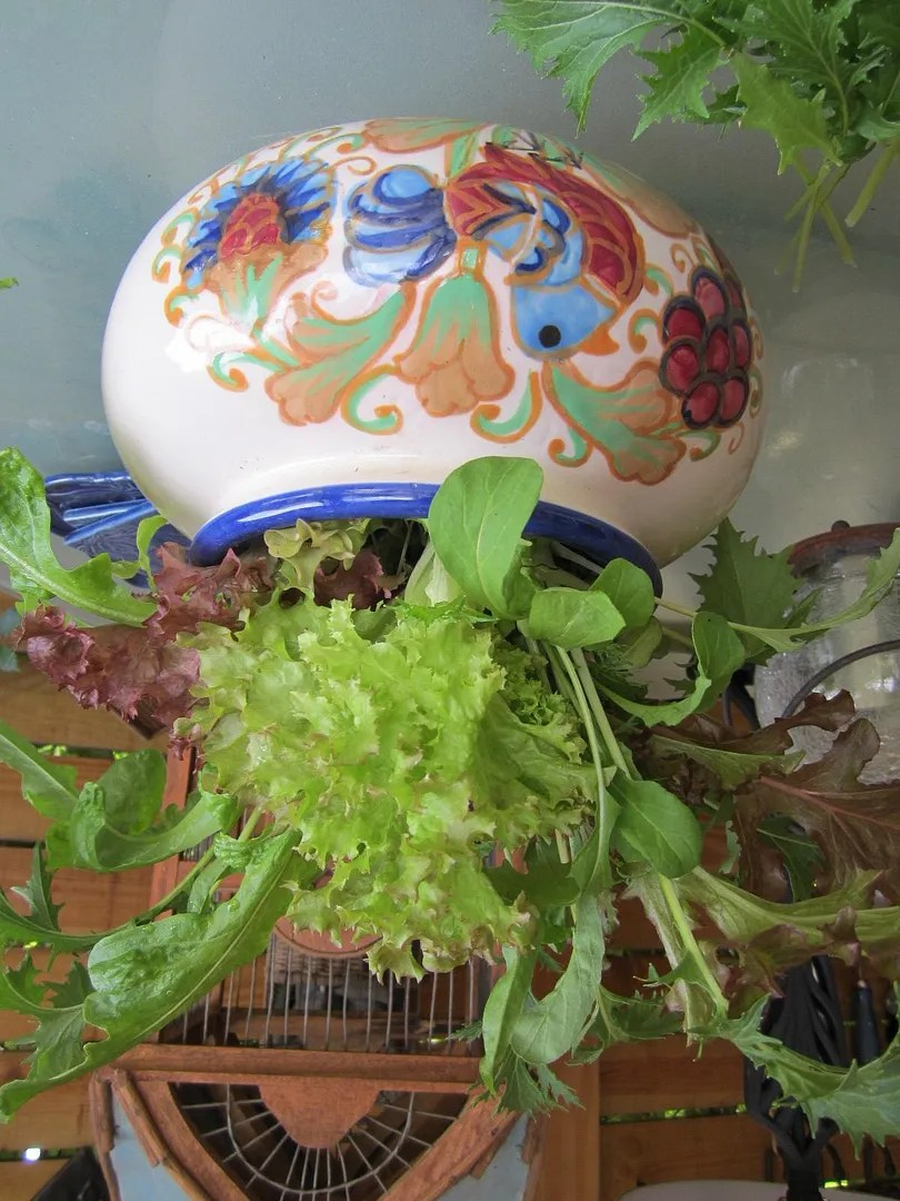 Grow Veggies in One Square Foot Of Soil--Really! / MyUrbanGardenOasis