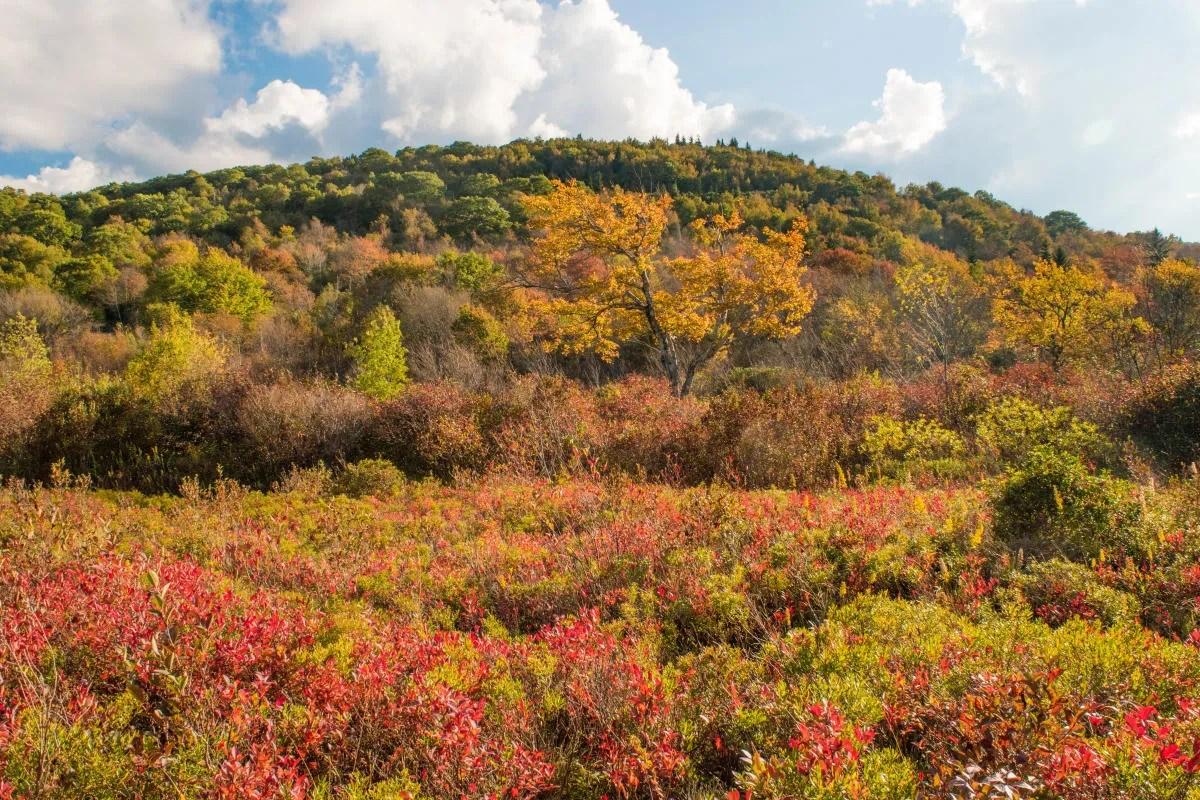 fall foliage in asheville