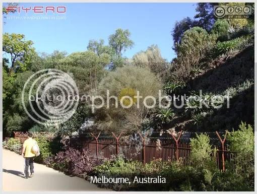 ต้นไม้, เมลเบิร์น, เมลเบอร์น, Melbourne, ออสเตรเลีย,  Australia, ไม้นอก, สวนต้นไม้, สวนสาธารณะ , ไม้แปลก, ดอกไม้, aKitia.Com