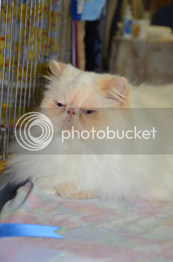 CatShowfolder2238_zpsf051a914