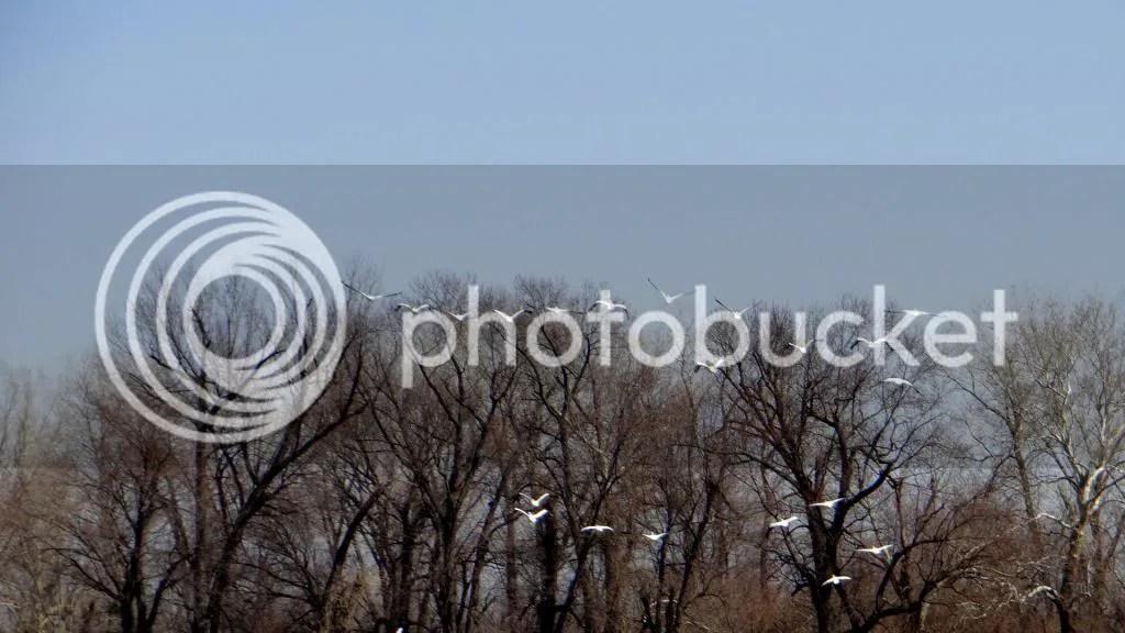 5 take off pelicans trash bash 230313 photo DSC02156.jpg