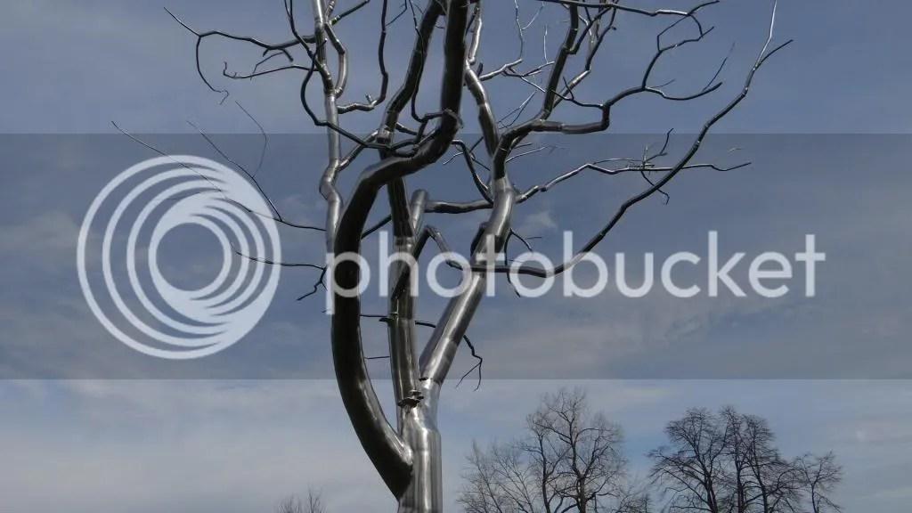 art tree mushrm 060413 fp photo DSC03598.jpg