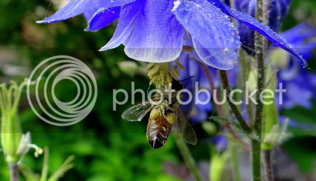 2 Bee STL 180513 photo DSC06958.jpg