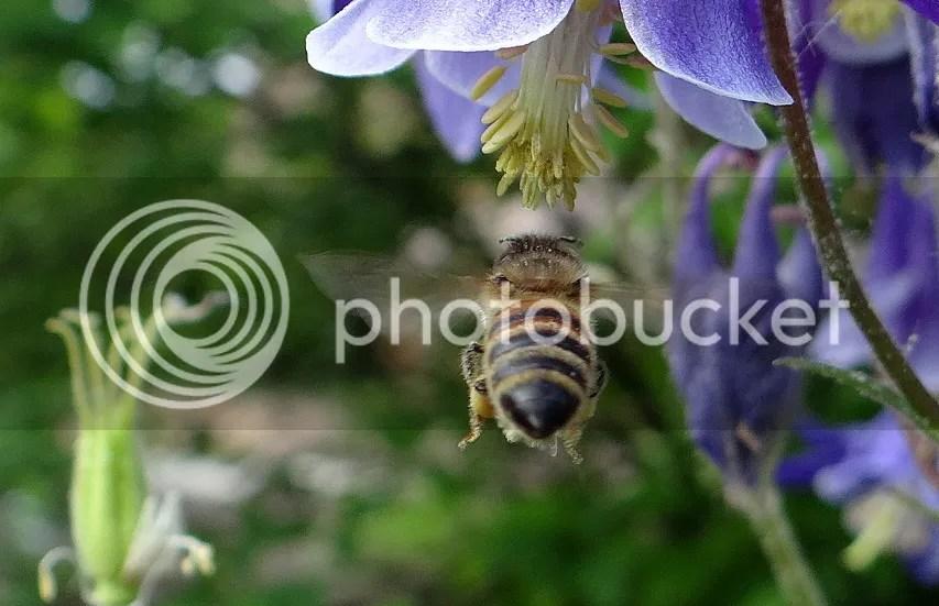 4 Bee STL 180513 photo DSC06961.jpg