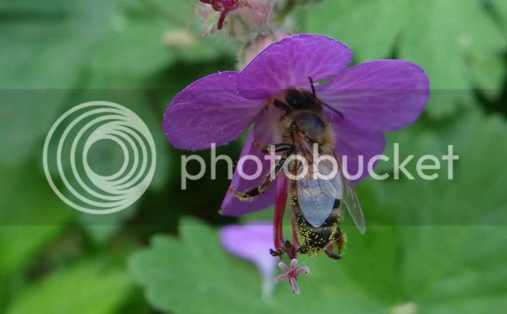8 Bee STL 180513 photo DSC06969.jpg