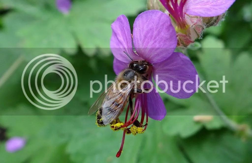 10 Bee STL 180513 photo DSC06971.jpg