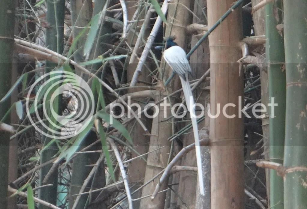 apf bamboo 060113 bgz