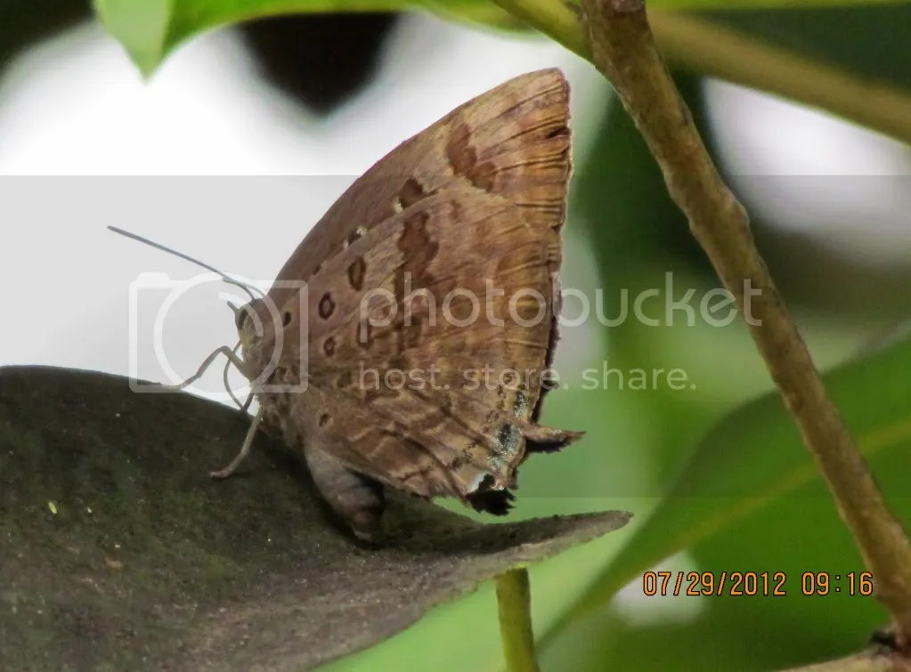 cmn oakblue 290712 jpngr resfrst