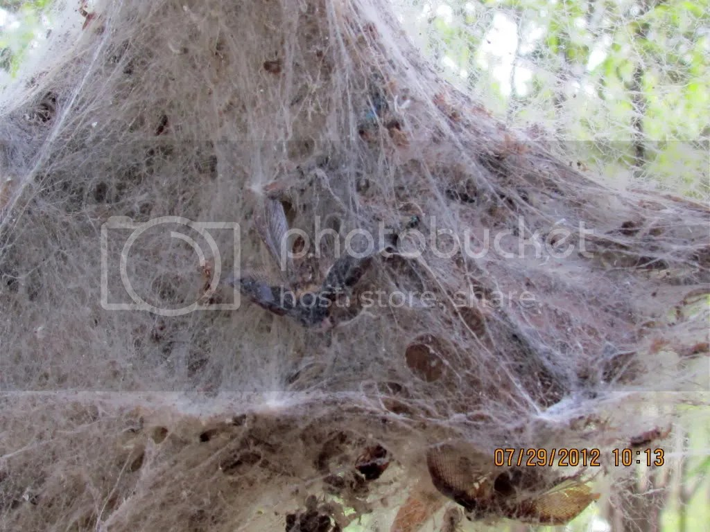 social spdr nest 290712 jpngr resfrst