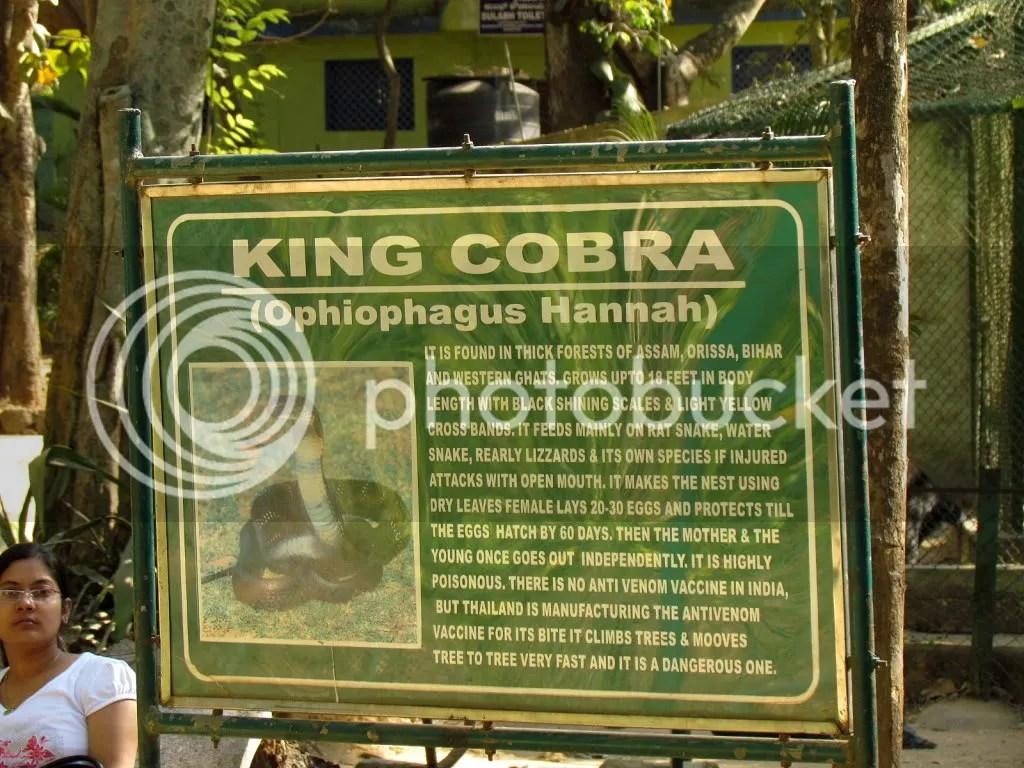 king cobra sign  bgz 180212