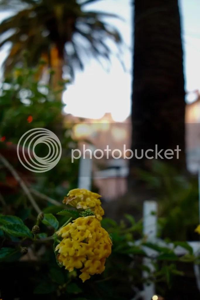 photo La Jolla 11_zpstbhgooih.jpg