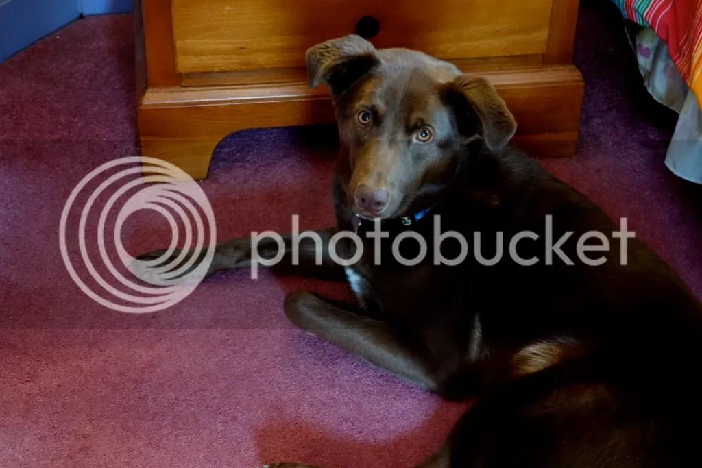 photo Lupin Little Wolf_zpsuqz47evh.jpg