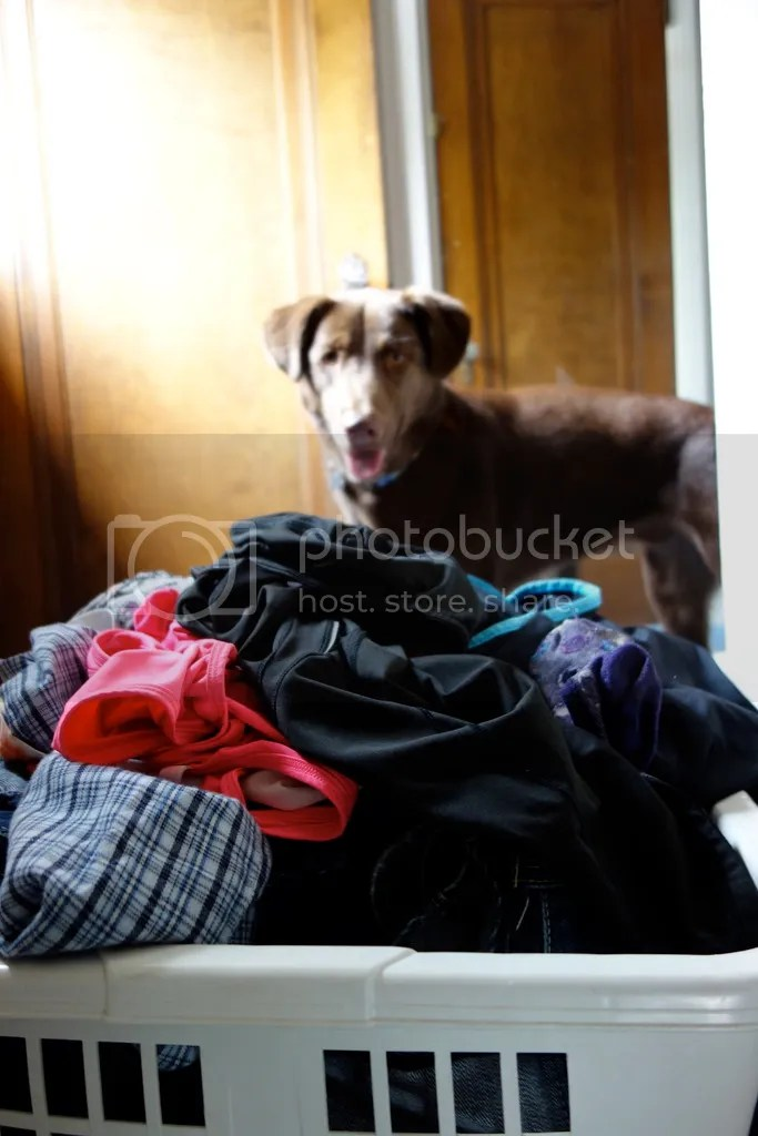 photo Laundry Pile_zps3cdrbosz.jpg