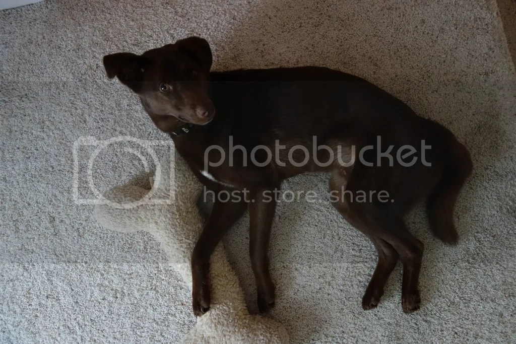 photo Puppy Bone Toy_zpsgydpcghx.jpg