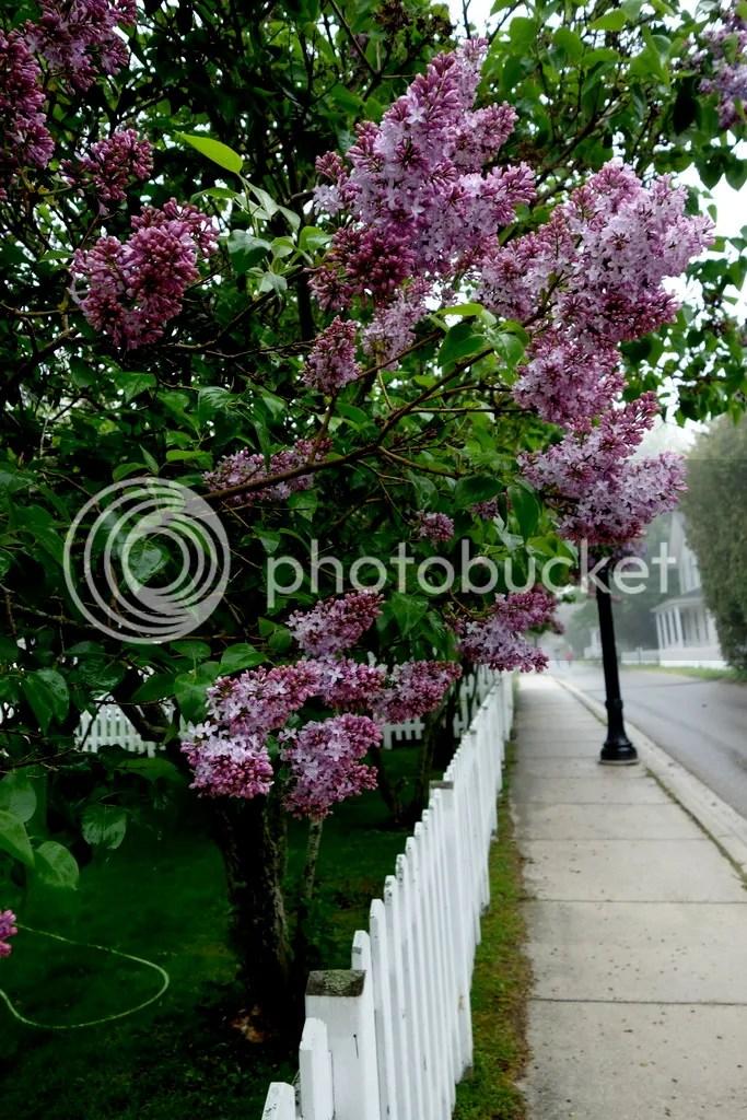 photo Lilac Festival Mackinac Island_zpslkxexmnh.jpg