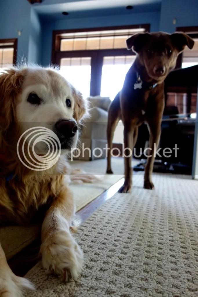 photo Abbey and Lupin_zpsb3jswy8i.jpg