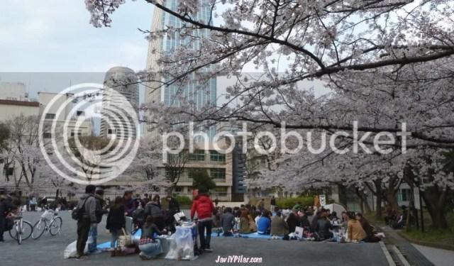 Hanami en Tokio