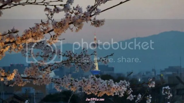 Sakura y Torre de Kioto