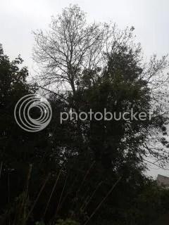 photo 020_zps33d343dc.jpg
