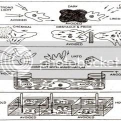 Euglena Diagram Blank Hand Muscle Anatomy Black Great Installation Of Wiring Amoeba Schematic Diagrams Rh 1 Koch Foerderbandtrommeln De Labeled Bacterium