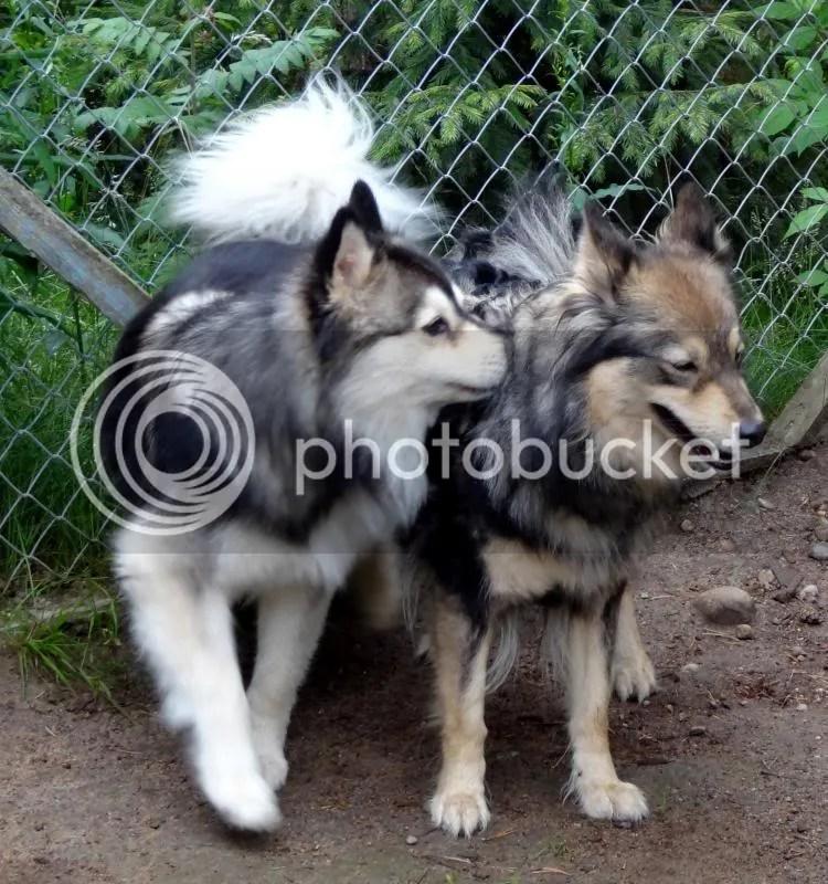 Dara och Chiro photo 012kopiera_zps5bd85bb3.jpg