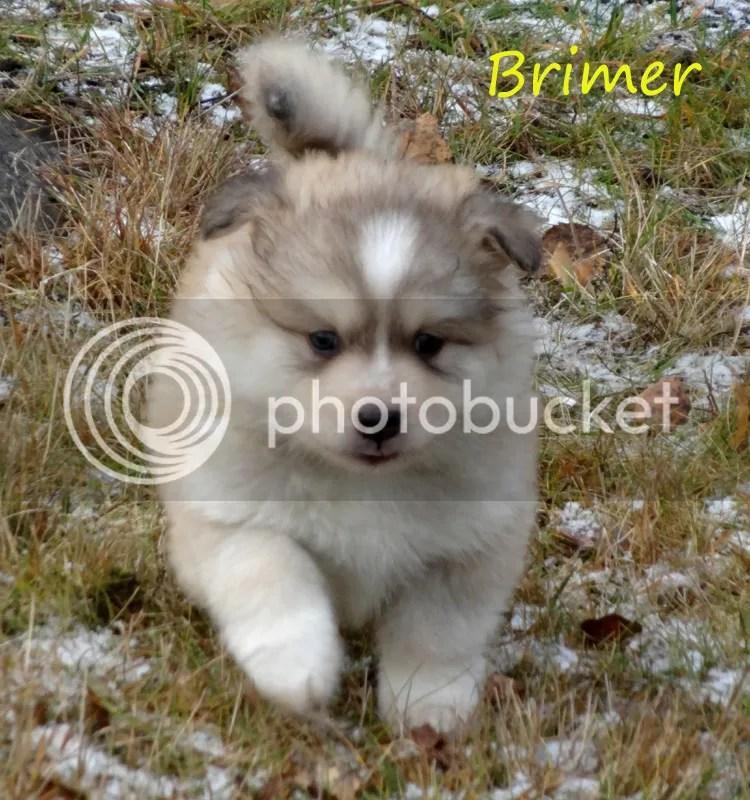 5 veckor och 5 dagar photo Brimer1kopiera_zps268e8624.jpg