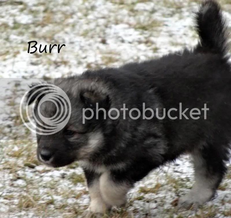 5 veckor och 5 dagar photo Burr6kopiera_zps0d0b22fe.jpg