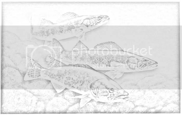 black crappie coloring pages