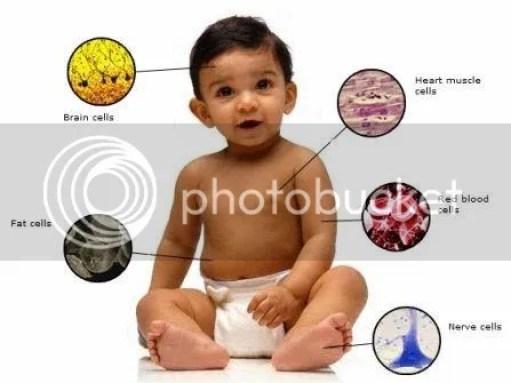 Dari satu sel, manusia berkembang menjadi trilyunan sel